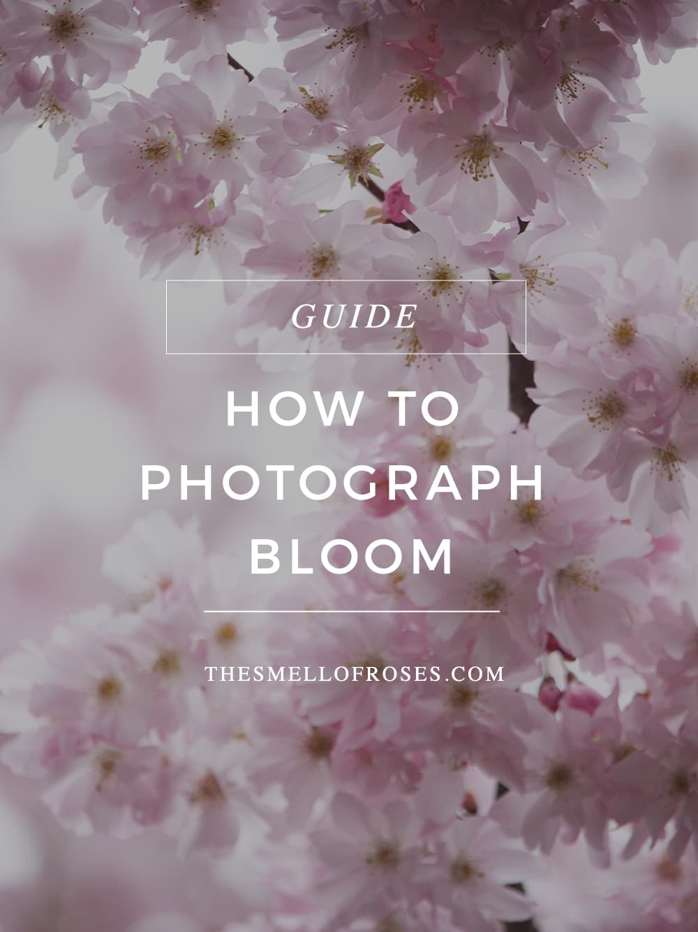 How To Photograph Flowering Trees The Smell Of Roses The Smell Of
