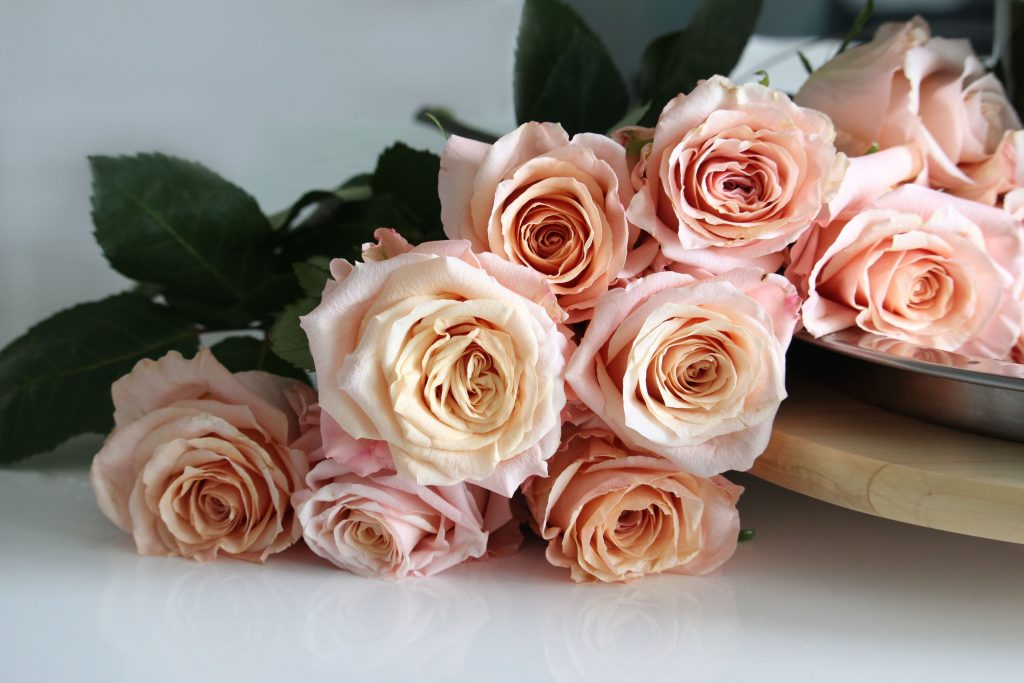rose shimmer a perfect blend of elegance and durability peach garden roses roses with
