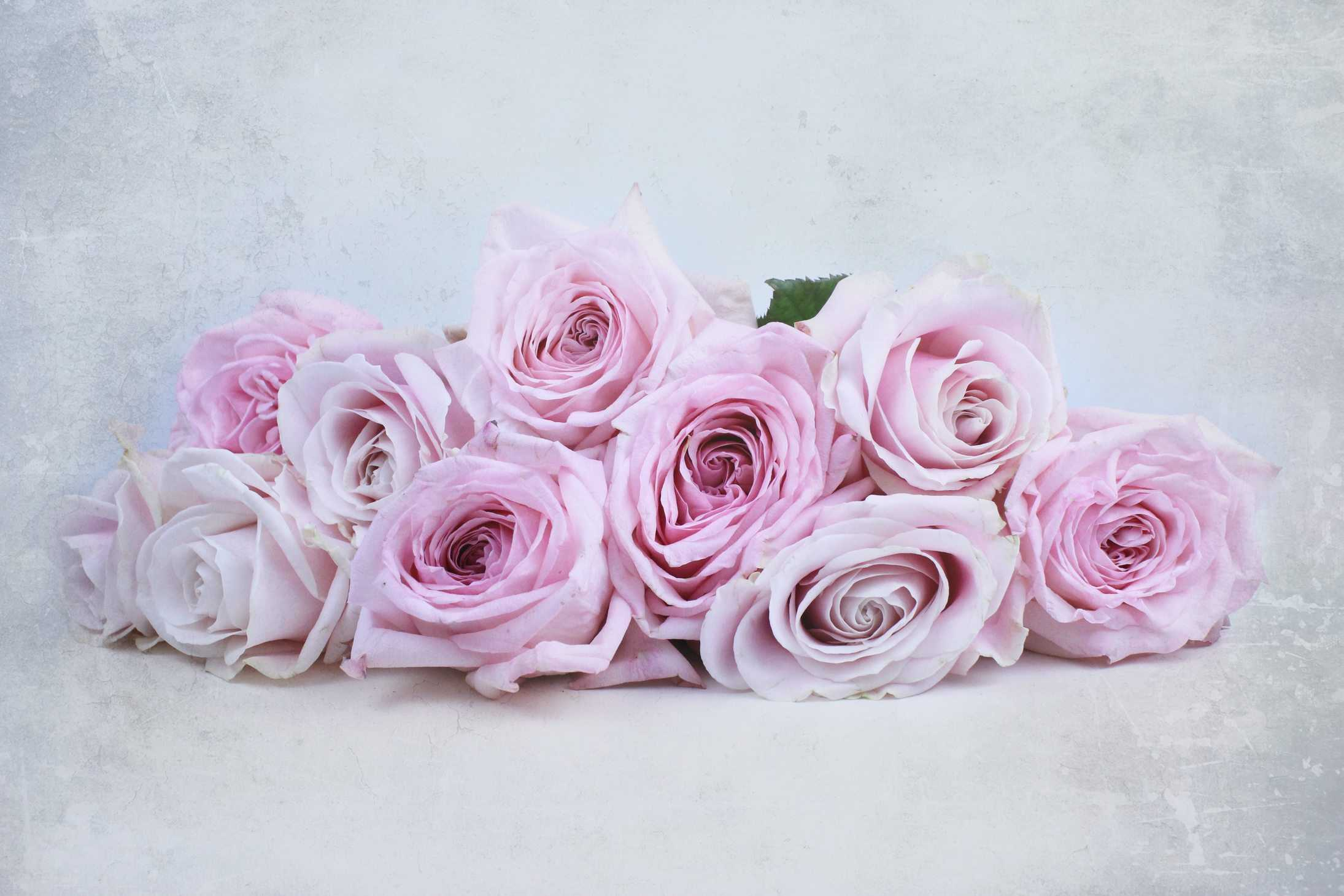 Perfect pink roses: O'hara and Avalanche