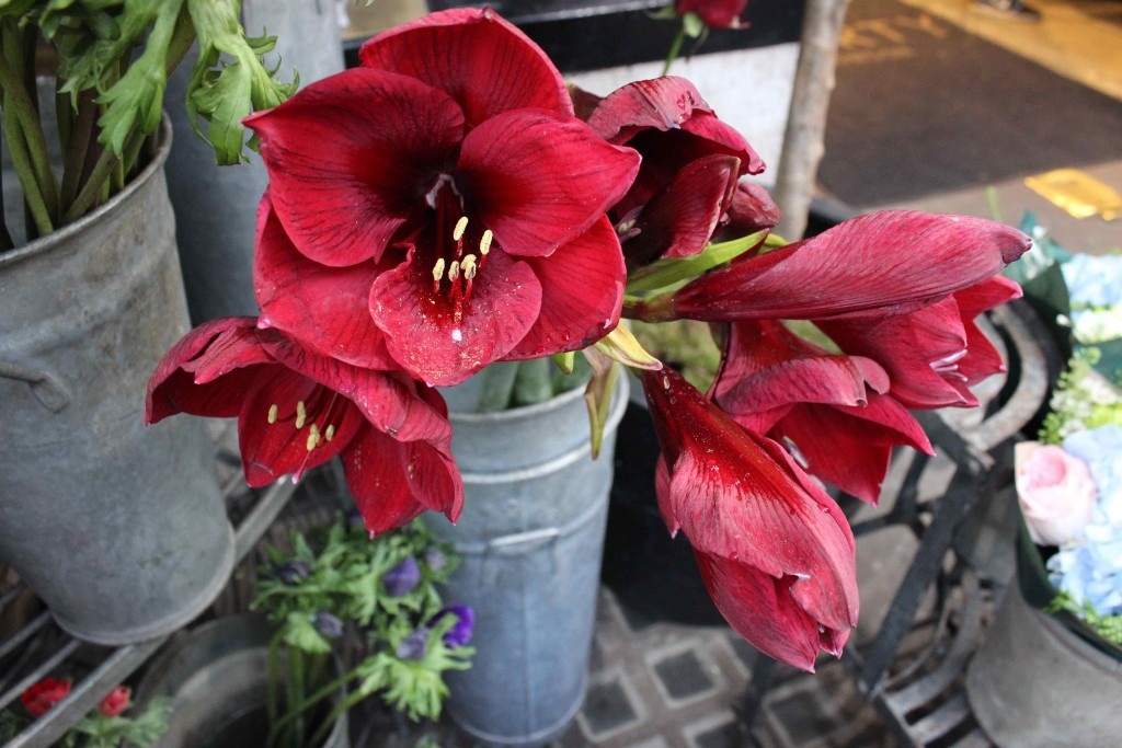 Liberties flower stand, Nikki Tibbles Wild at Heart, Liberties, Amaryllis, red