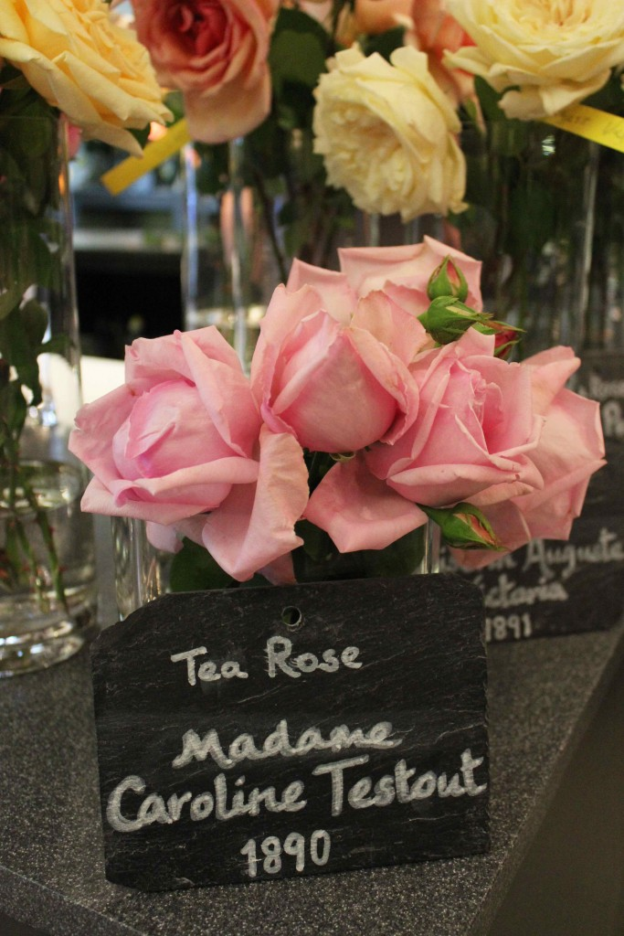 Madame Caroline Testout, A Celebration Of The Rose, Neill Strain, Garden roses, old roses,  rare roses, country roses