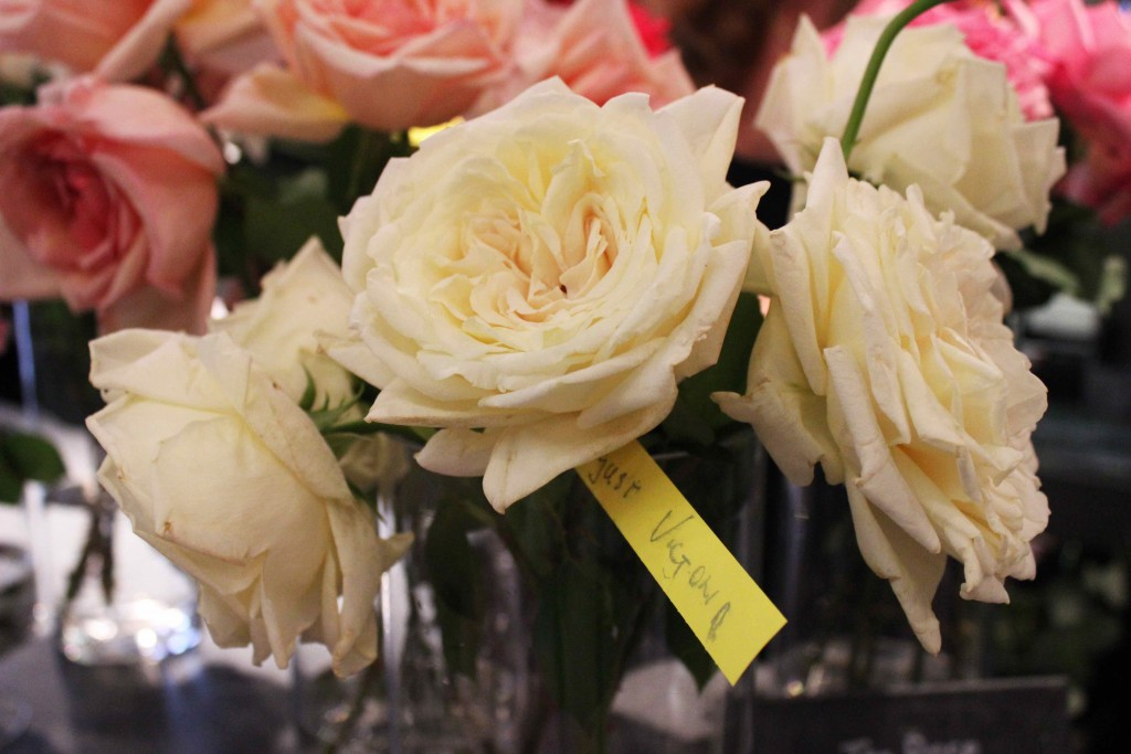 kaiserin auguste victoria rose, A Celebration Of The Rose, Neill Strain, Garden roses, old roses,  rare roses, country roses