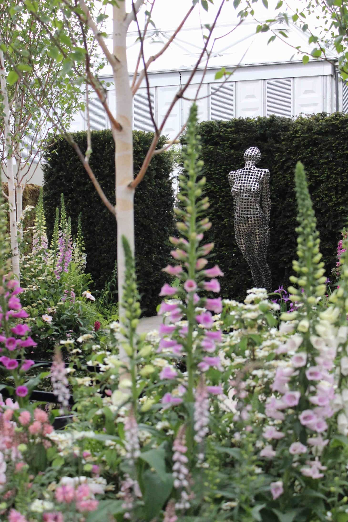 Chelsea flower show 2015, Lush roses, pink roses from chelsea, Garden roses, old roses, remembering chelsea flower show 2015, Breakthrough Breast Cancer Garden, Foxgloves and Lupiniums