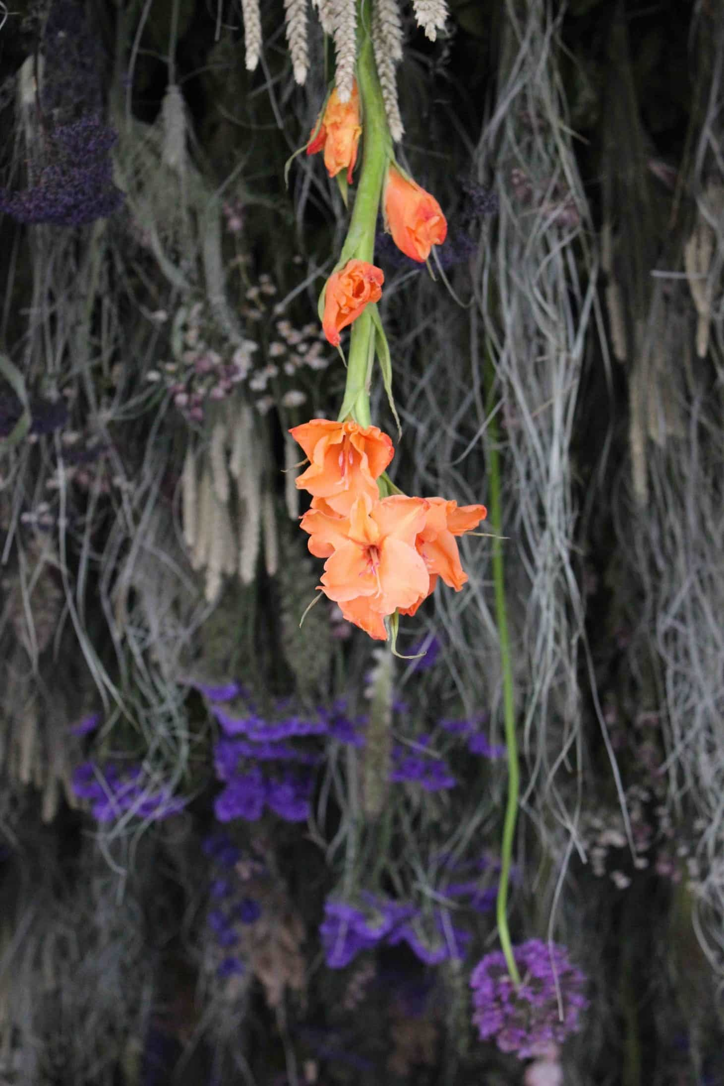 Chelsea flower show 2015, garden roses, rebecca louise law