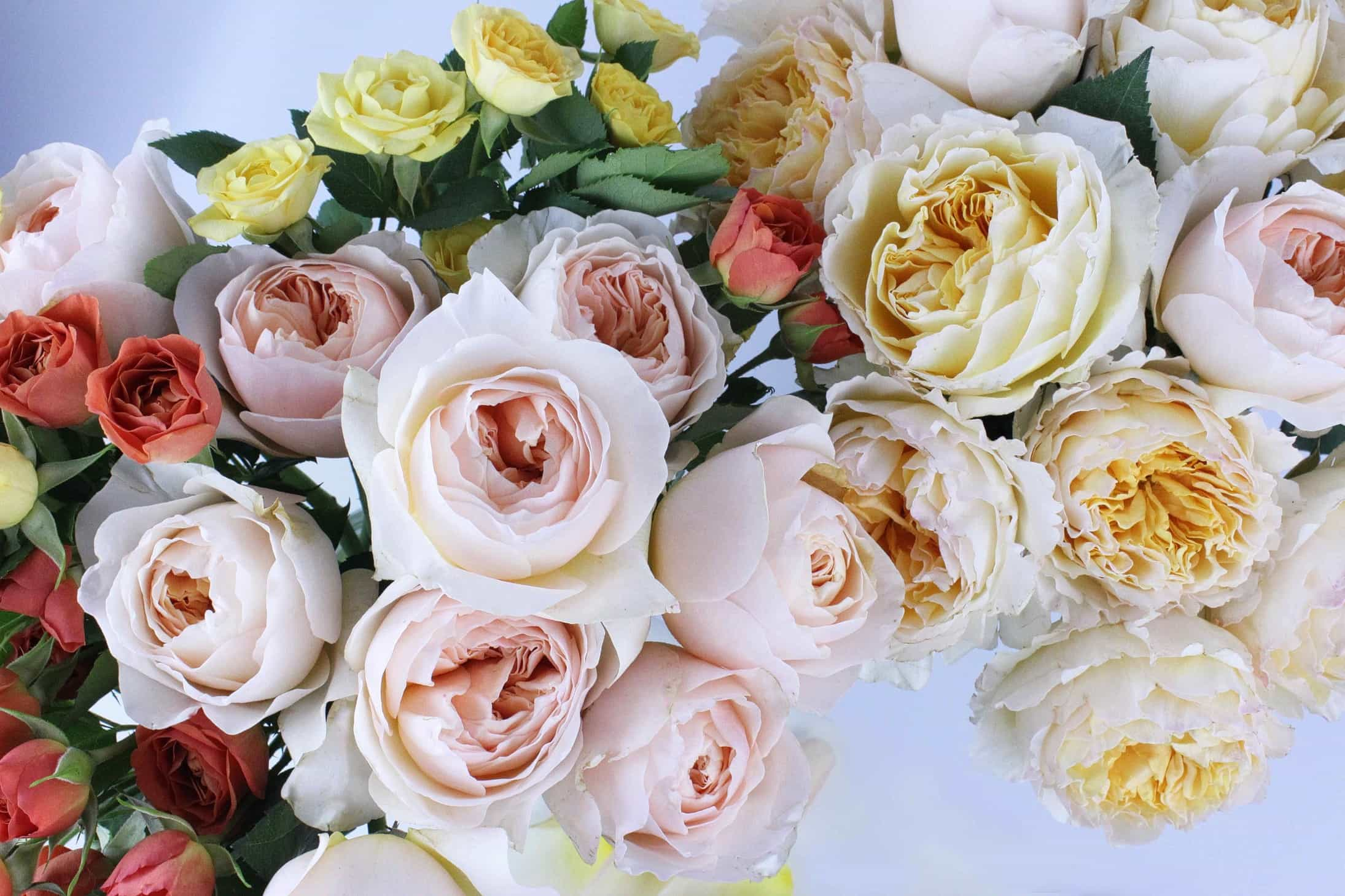 cut garden roses, cabbage roses in floristry, old roses, Rose Juliet