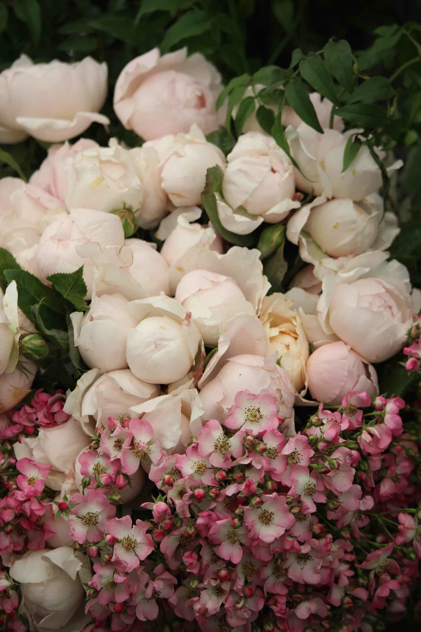 Hampton Court Flower Show 2016, The Real Flower Company, David Austin, garden roses, cut roses, Rose Peony Pink, scented roses