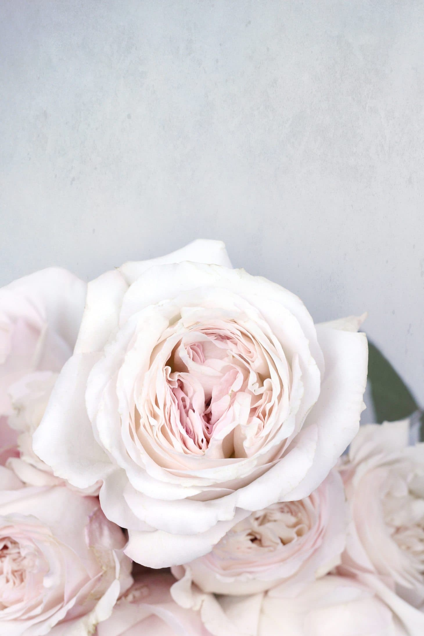 What do roses really smell of, rose smell, not all roses smell the same, rose perfume, Kiera rose, David Austin roses, wedding roses, vintage looking rose images