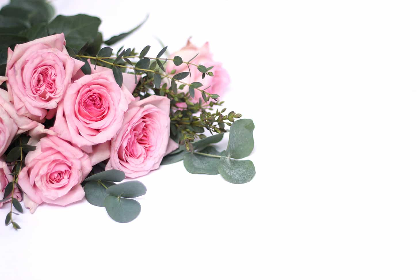 What do florists do with unsold flowers, flower trade, what happens to unsold flowers, rose pink ohara on white background