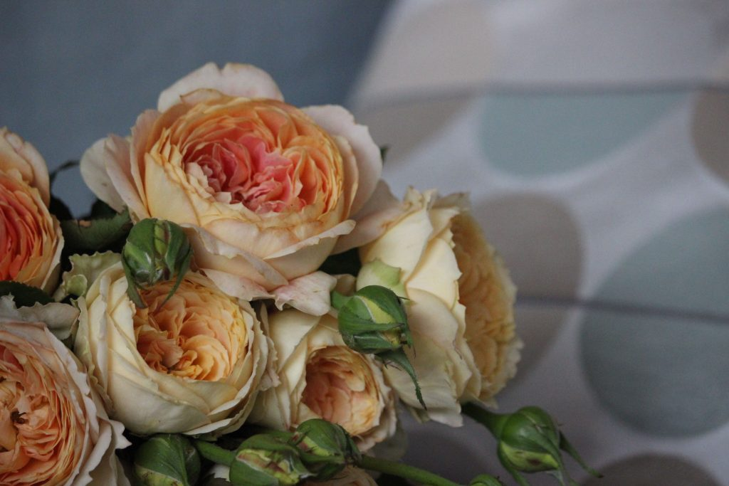 Old Garden Roses, variety old garden rose, variety old rose, all about old roses