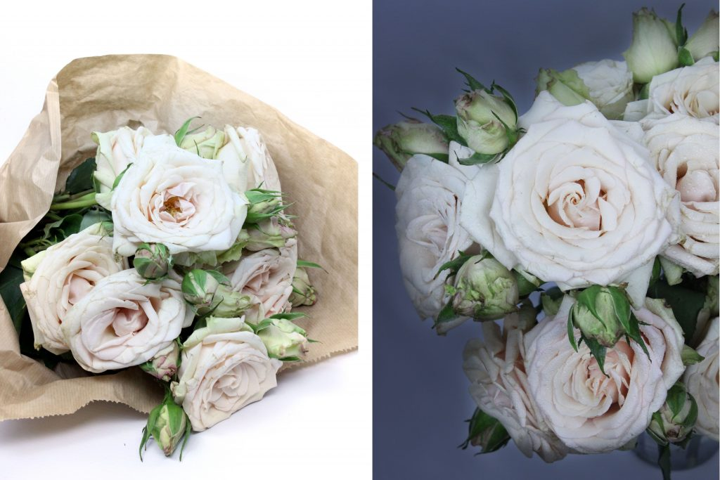 Spray Rose Quicksand, beige wedding rose, sandy roses, blush rose
